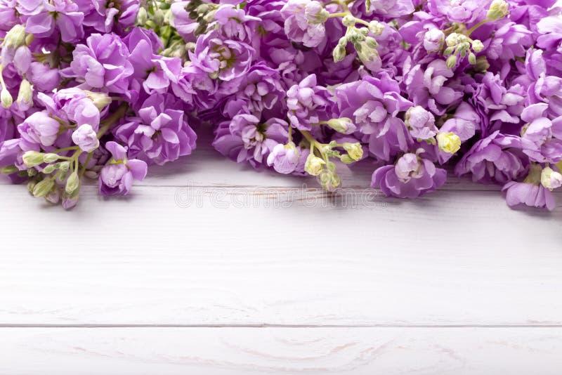 Fiori lilla di mattiola della primavera fotografia stock libera da diritti