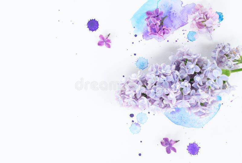 Fiori lilla freschi immagini stock libere da diritti