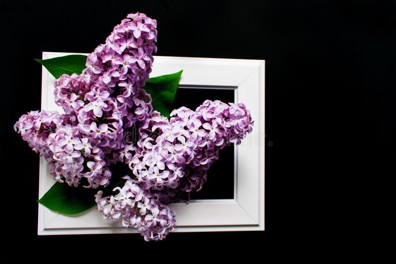 Fiori lilla nel telaio bianco su un fondo nero fotografia stock