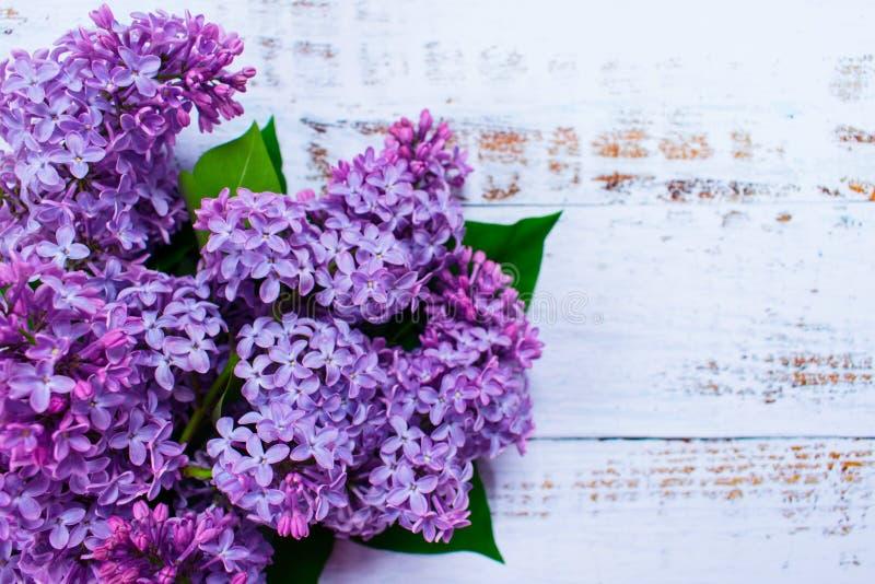 Fiori lilla porpora su fondo di legno bianco fotografie stock libere da diritti