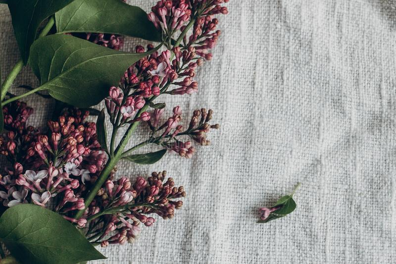 Fiori lilla porpora sul fondo rustico del tessuto su tabl di legno fotografia stock libera da diritti