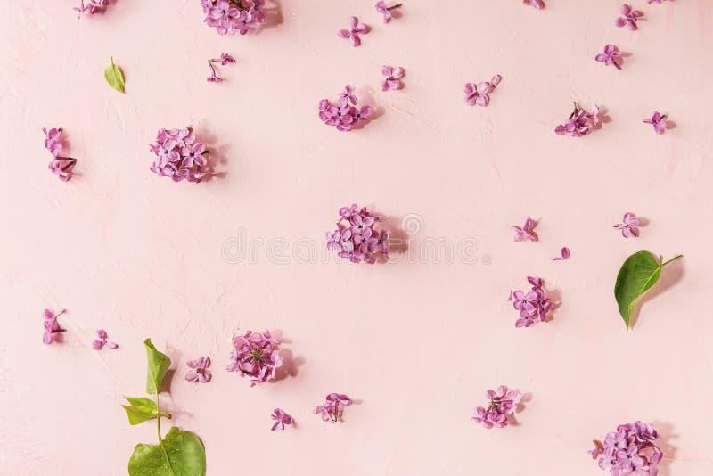 Fiori lilla sopra il rosa immagine stock