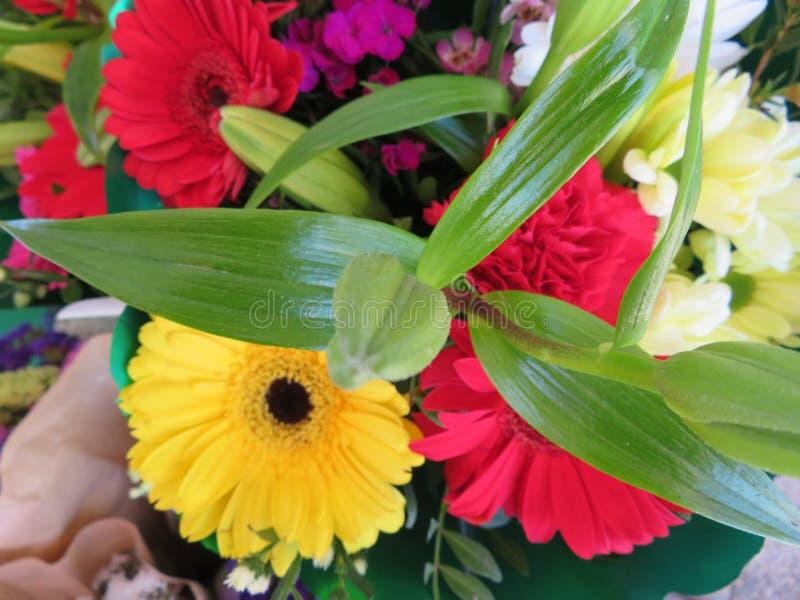 Fiori meravigliosi con un colore e un odore cos? buoni immagine stock