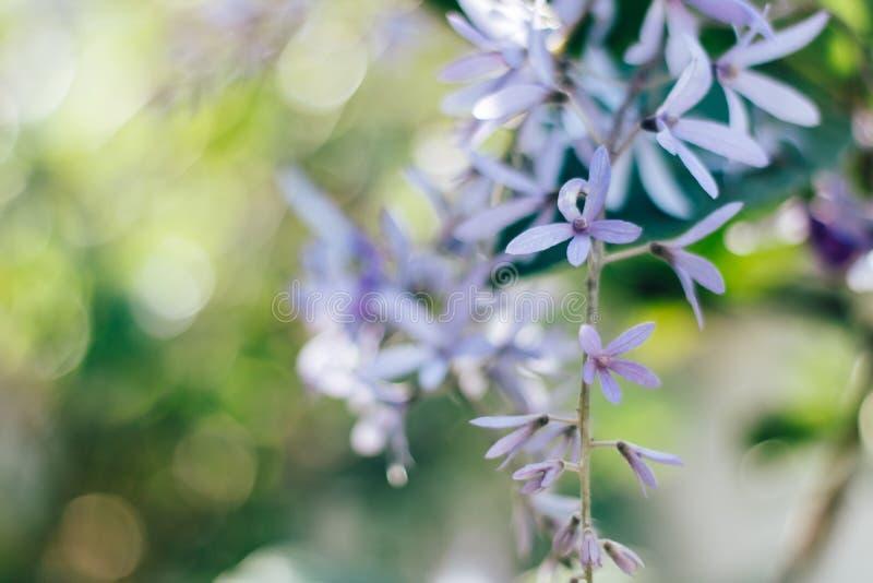 Fiori minuscoli viola alla luce della natura fotografie stock libere da diritti