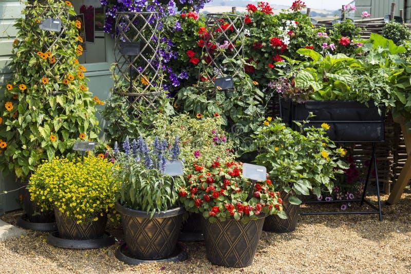 Fiori misti nella corte del giardino dei vasi di argilla immagine stock libera da diritti