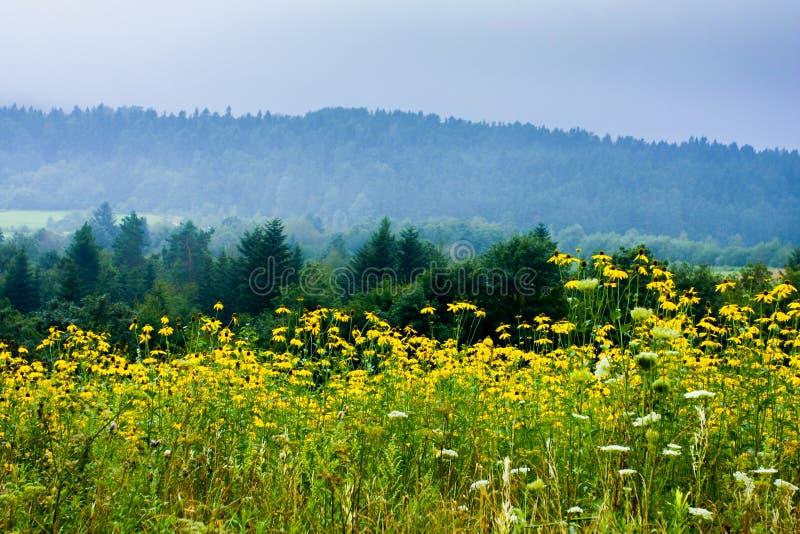 Fiori in montagna fotografie stock libere da diritti