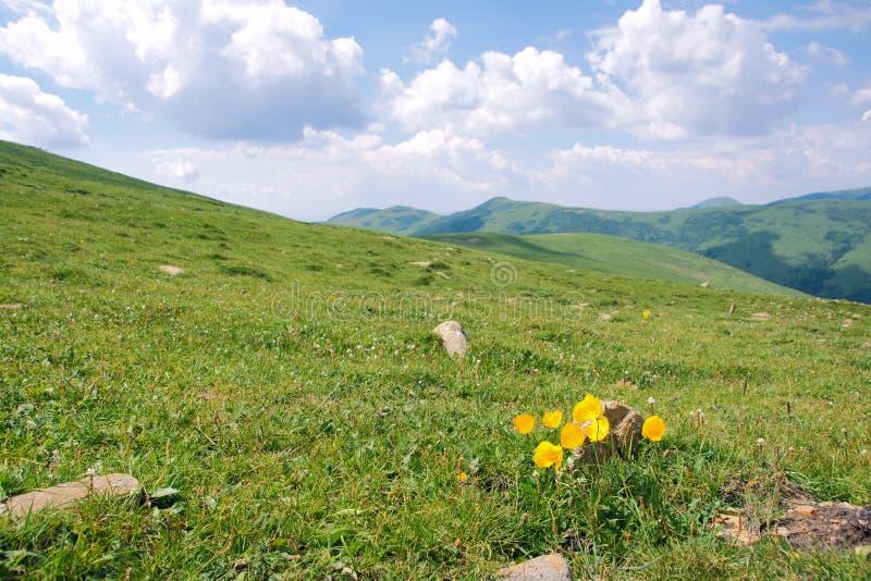 Fiori in montagne fotografia stock libera da diritti
