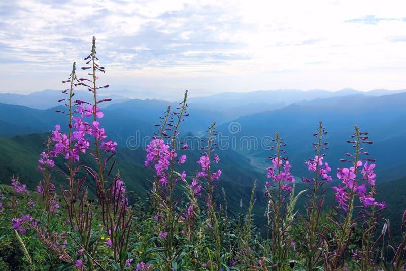Fiori in montagne fotografia stock