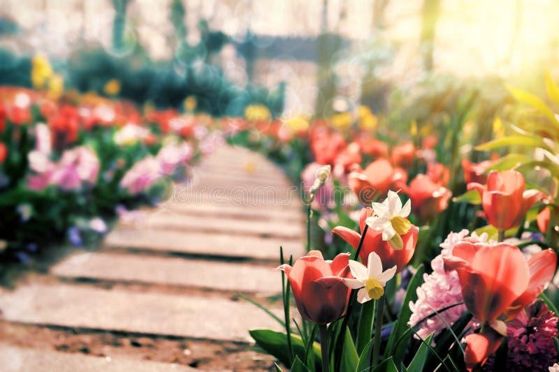 Fiori multicolori nel parco del ramoscello immagine stock