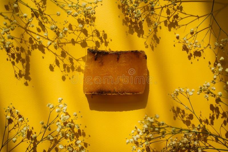 Fiori naturali del sapone e del campo di eco su fondo giallo con le ombre immagine stock