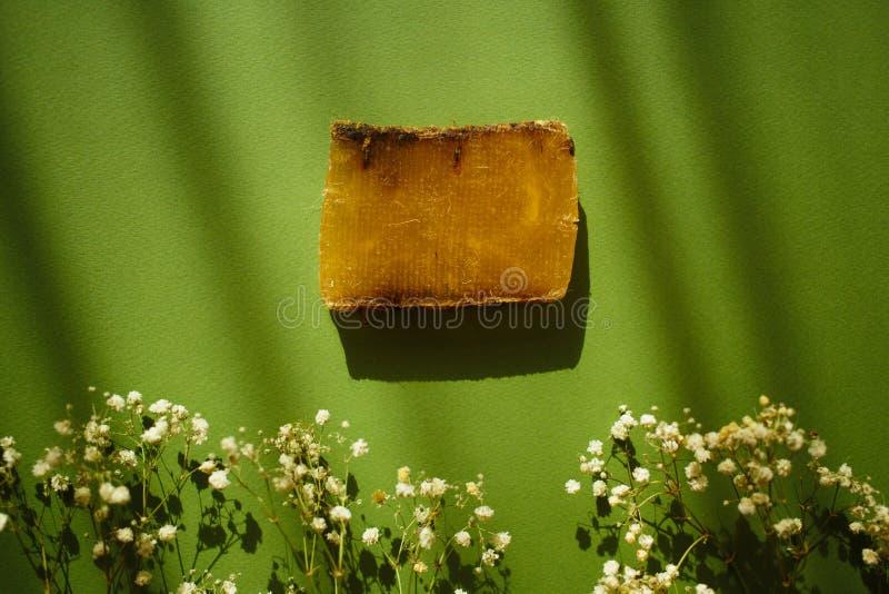 Fiori naturali del sapone e del campo di eco su fondo verde con le ombre fotografia stock libera da diritti