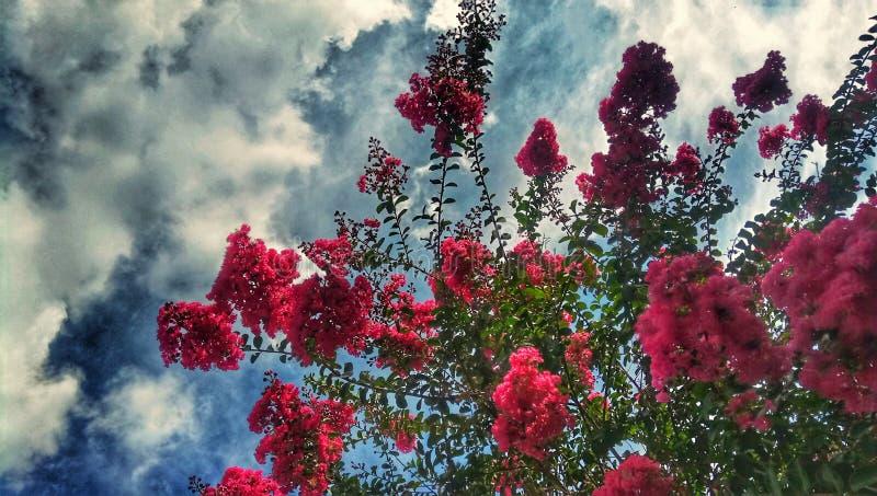 Fiori nel cielo fotografia stock
