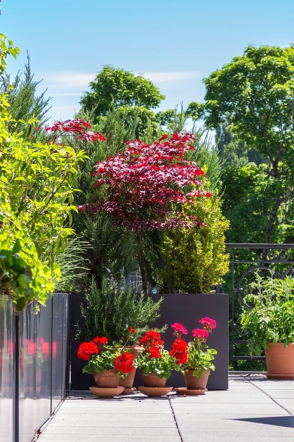 Fiori nel giardino del terrazzo immagine stock libera da diritti