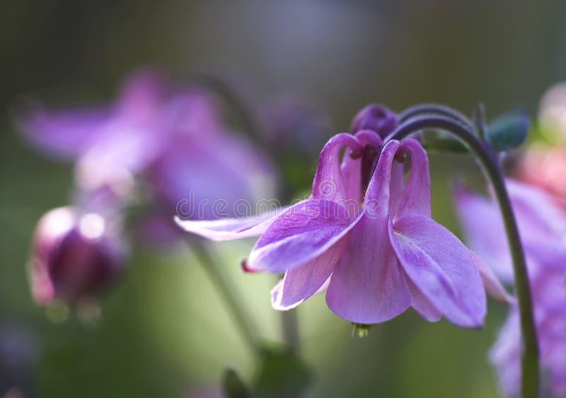 Fiori nel mio giardino fotografia stock