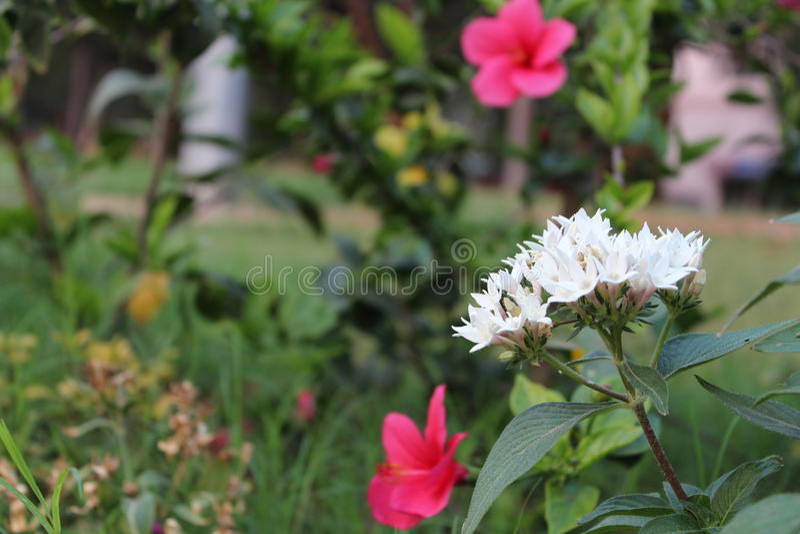 Fiori nel NIT warangal fotografie stock libere da diritti