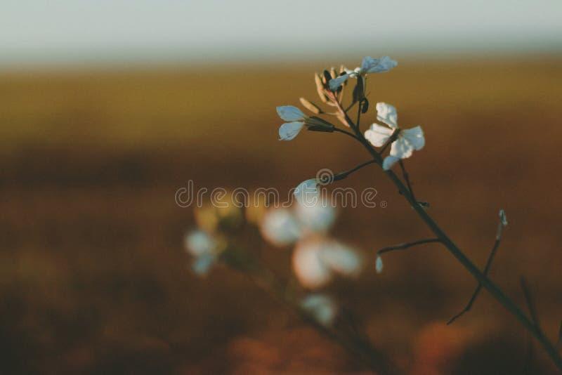 Fiori nel tramonto fotografia stock libera da diritti