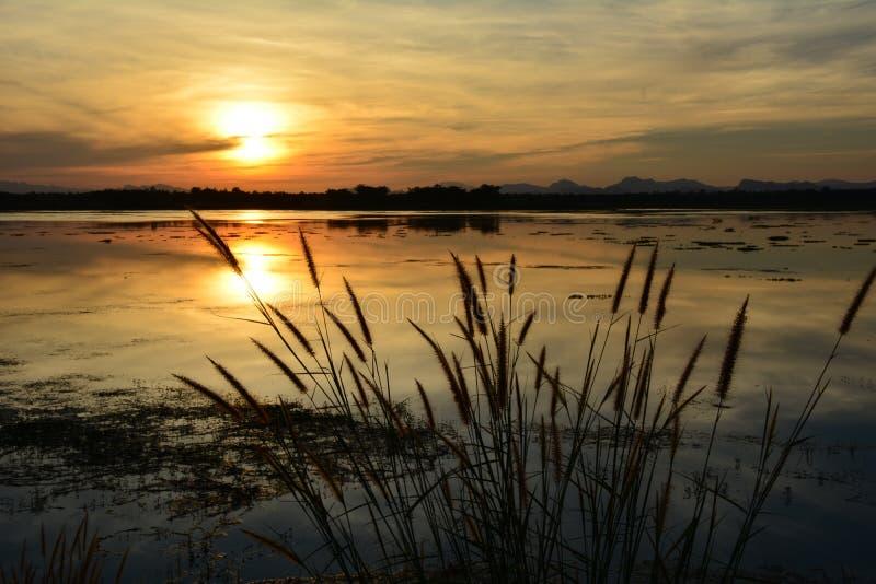 Fiori nel tramonto immagine stock