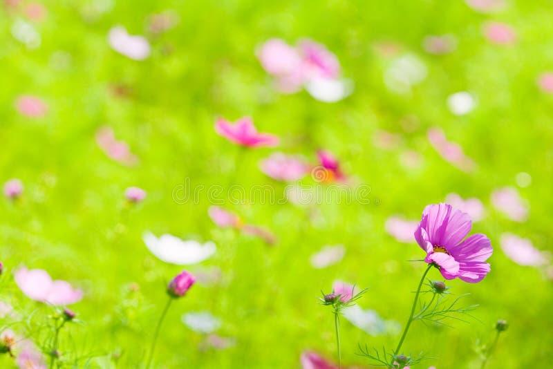 Fiori nel verde di erba fotografia stock