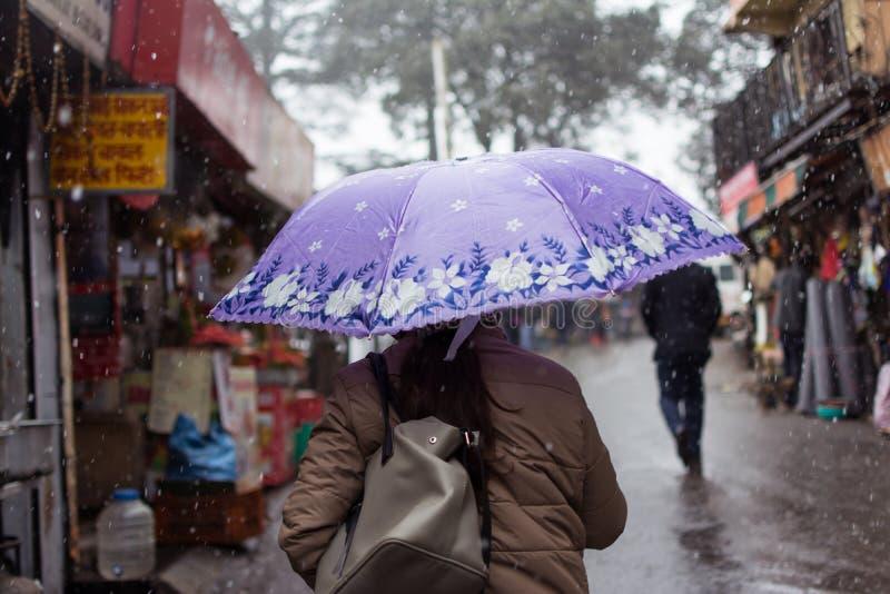Fiori nell'ambito delle precipitazioni nevose fotografia stock libera da diritti