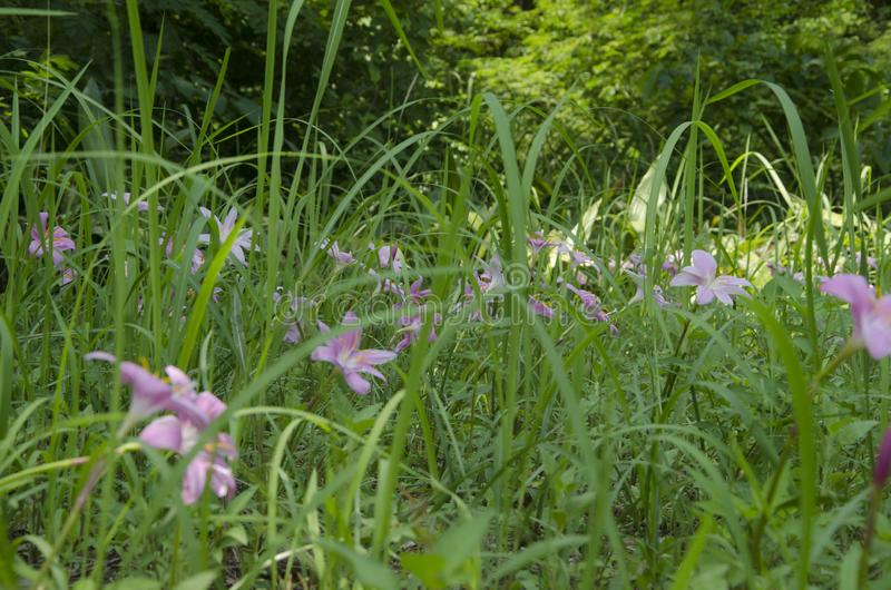 Fiori nell'erba fotografia stock libera da diritti