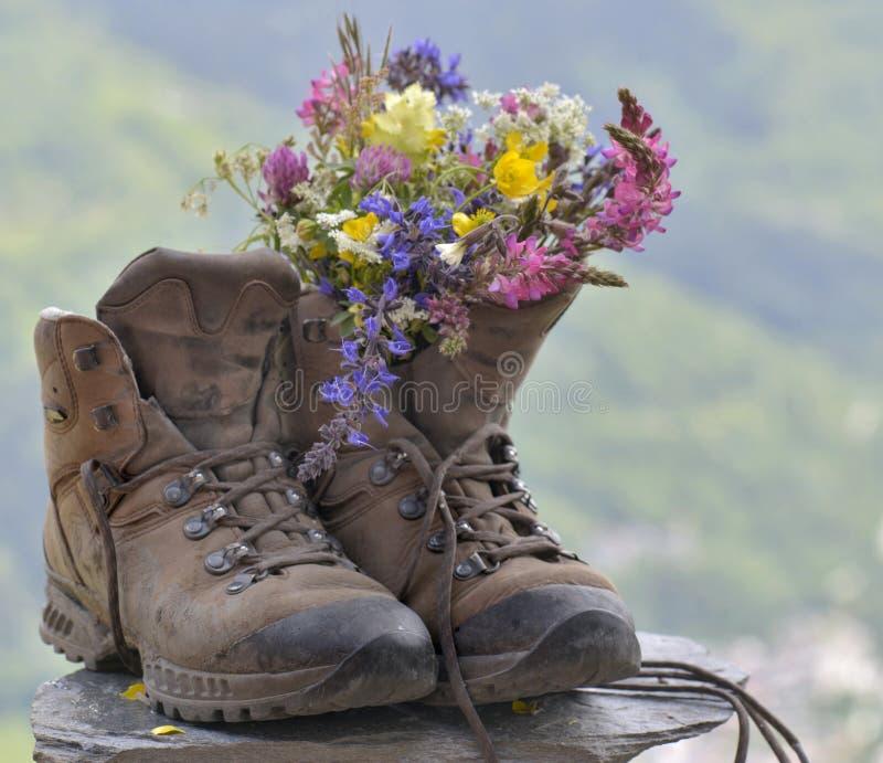 Fiori nell'escursione delle scarpe fotografie stock libere da diritti