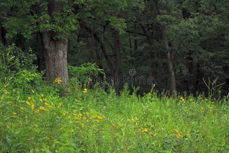 Fiori nella foresta fotografie stock libere da diritti