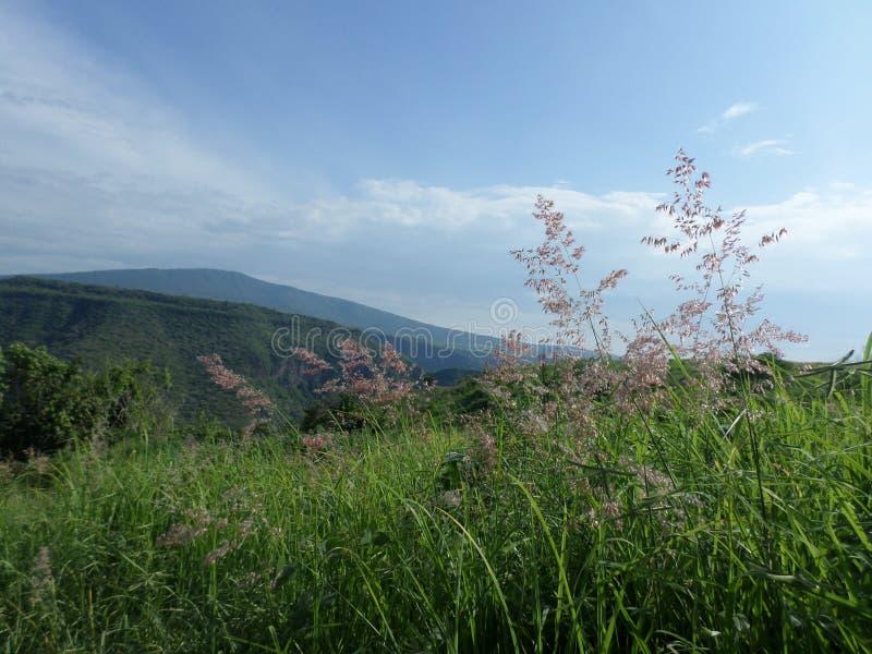 Fiori nella grande montagna fotografia stock libera da diritti