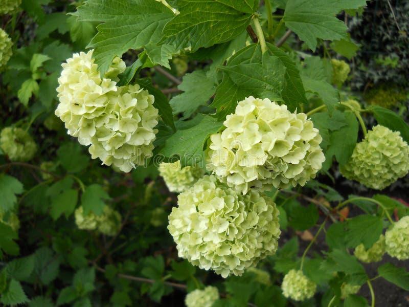Fiori piacevoli della molla con le foglie verdi immagine stock