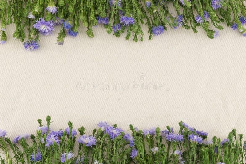Fiori porpora della taglierina sul tessuto bianco della mussola fotografia stock libera da diritti