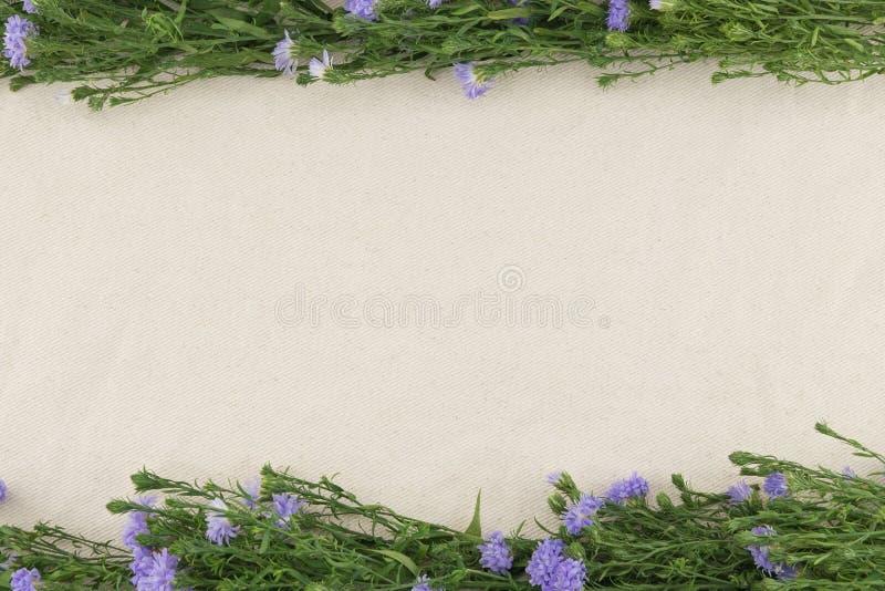 Fiori porpora della taglierina sul tessuto bianco della mussola fotografia stock
