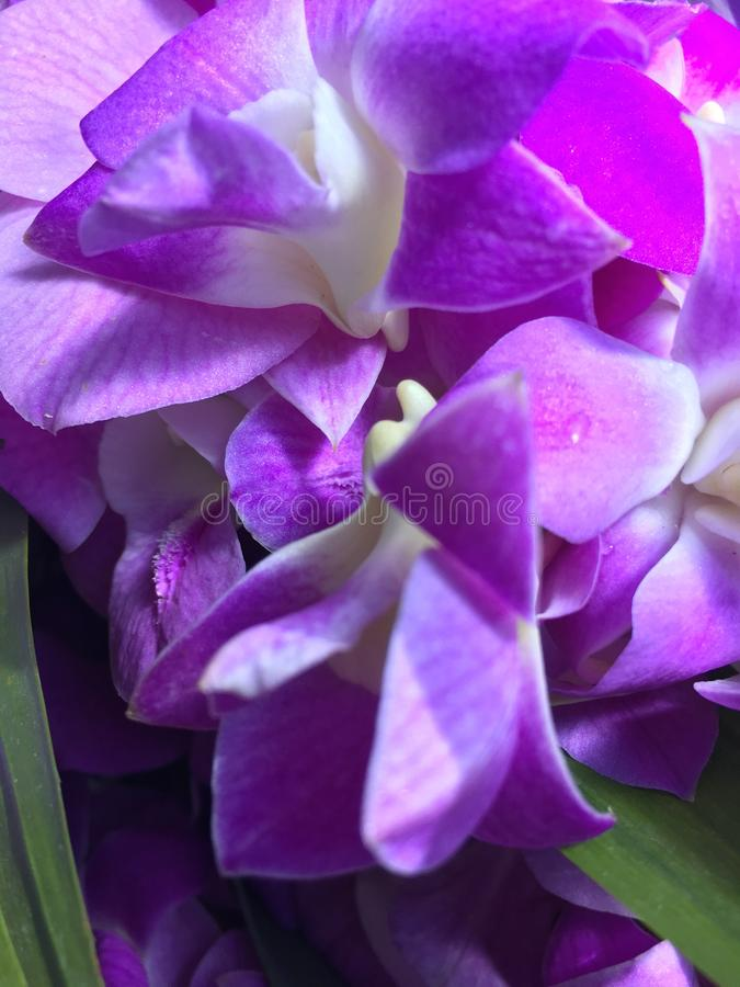 Fiori porpora e foglie pandan fotografie stock