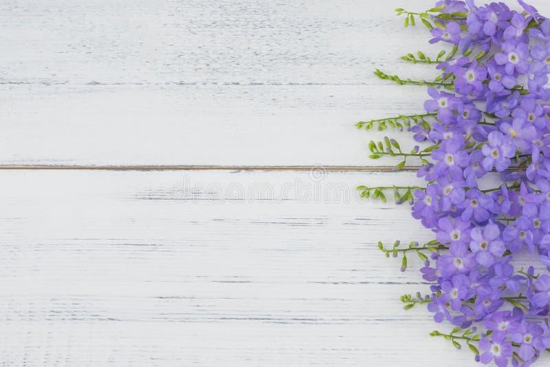 Fiori porpora su legno bianco immagine stock libera da diritti