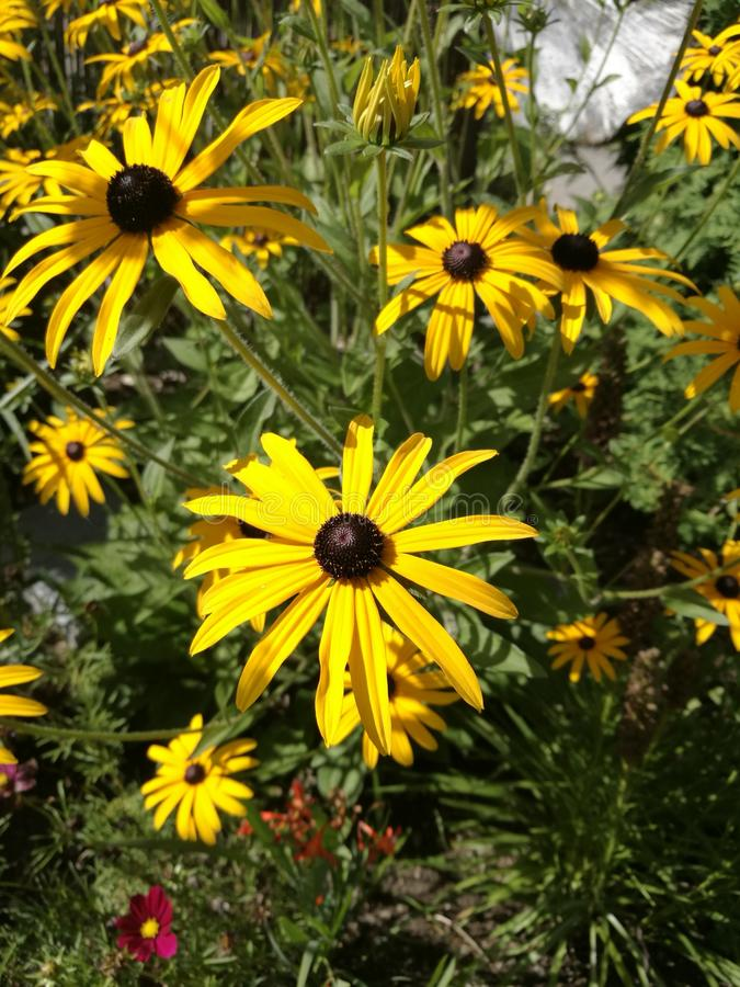 Fiori in possedere giardino fotografie stock