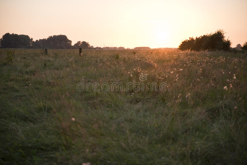 Fiori in prato Schalkwijk immagini stock