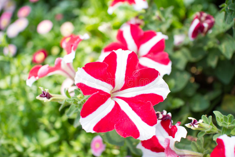 Connu Fiori rari fotografia stock. Immagine di fiore, pianta - 38678516 NC37
