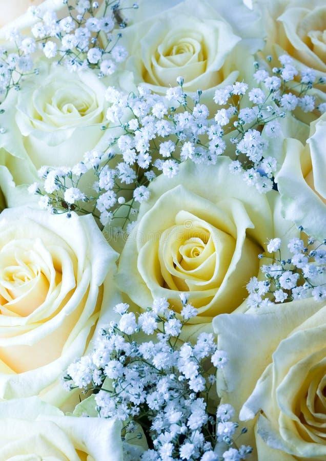 Fiori romantici immagine stock