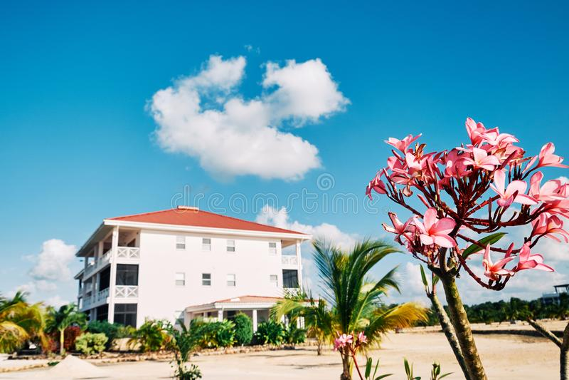 Fiori rosa con un condominio nei precedenti immagine stock