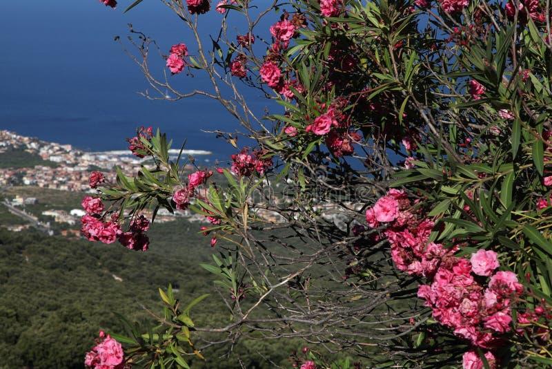 Fiori rosa contro il mare fotografia stock libera da diritti