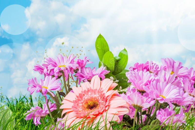 Fiori rosa di estate fotografia stock