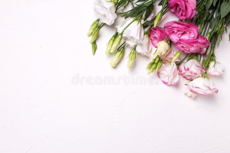 Fiori rosa e bianchi di eustoma immagine stock