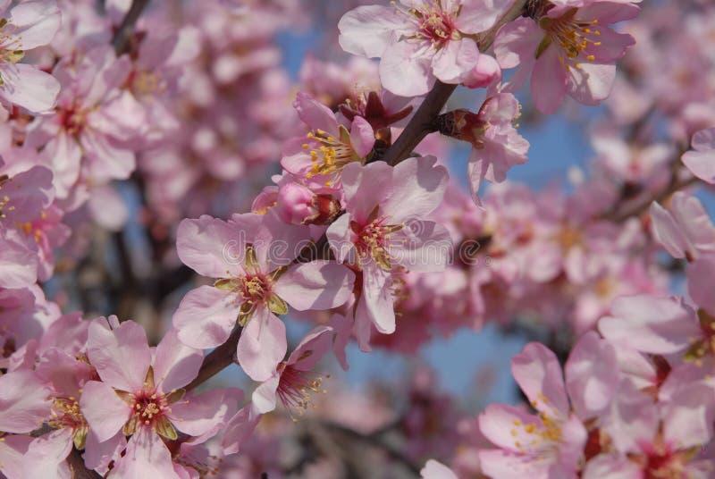 Fiori rosa e foglie verde intenso, retroilluminati immagini stock