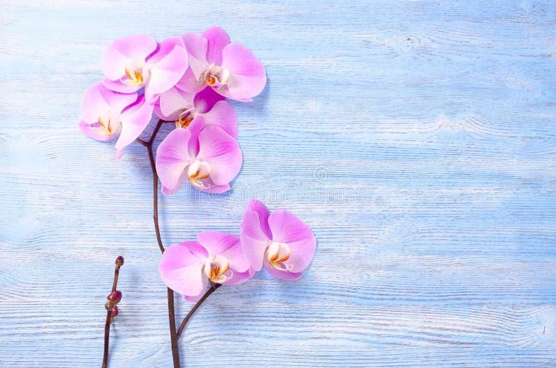 Fiori rosa freschi dell'orchidea e un piccolo mazzo con il germoglio sui precedenti di legno d'annata blu fotografia stock