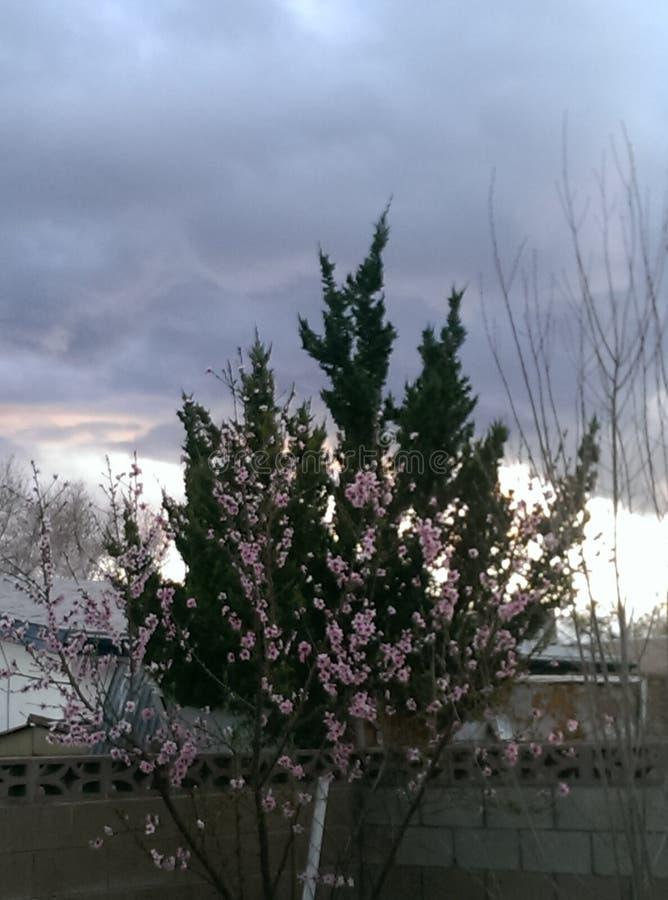 Fiori rosa in mezzo dei pini verdi fotografie stock
