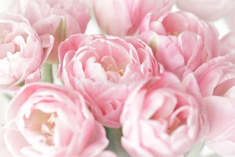 Fiori rosa nostalgici del tulipano fotografie stock libere da diritti