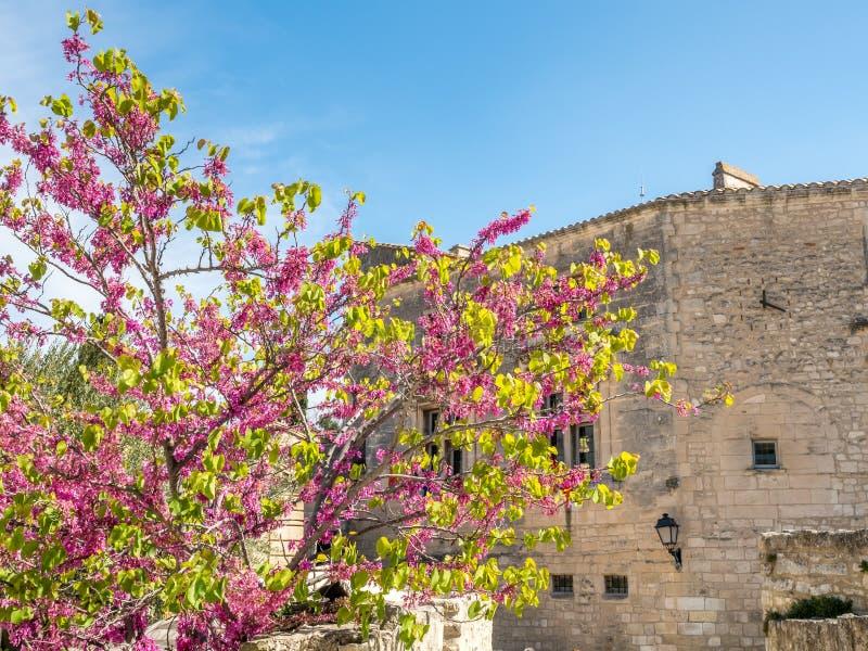 Fiori rosa sotto cielo blu fotografie stock