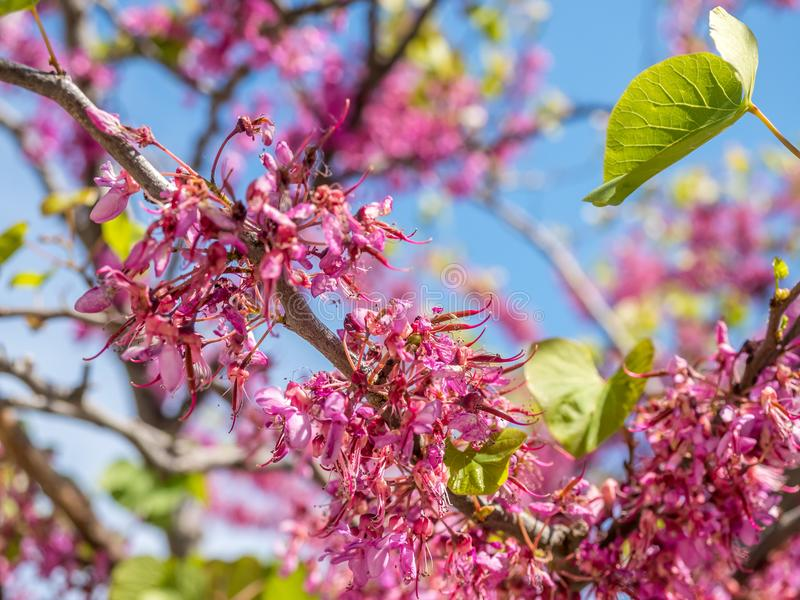 Fiori rosa sotto cielo blu immagini stock libere da diritti
