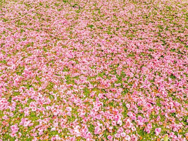 Fiori rosa su erba immagine stock libera da diritti