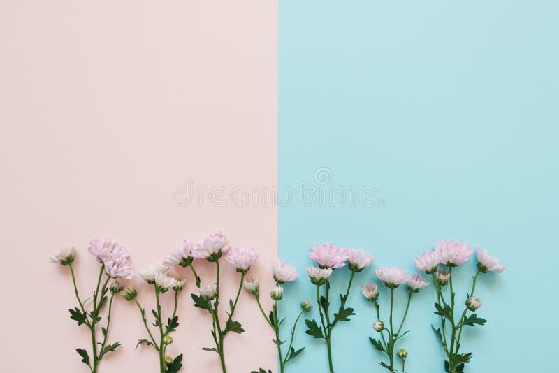 Fiori rosa su fondo rosa-blu fotografia stock