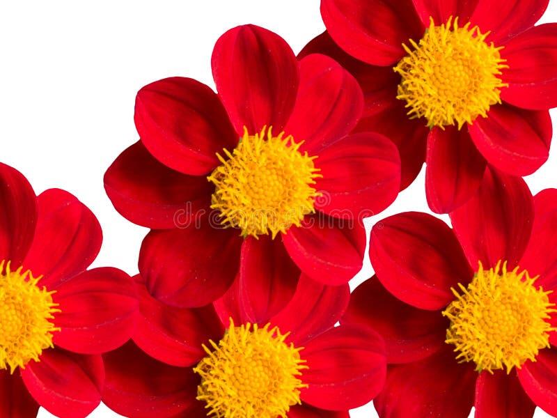 Fiori, rossi fotografie stock