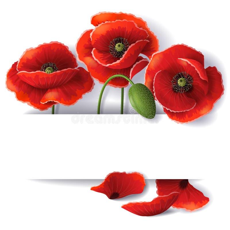 Fiori rossi del papavero illustrazione di stock
